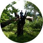 Woody Hayday - Climbing a tree